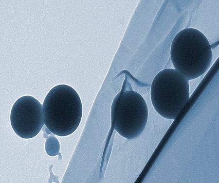 Desarrollan nano-alimentos del futuro a partir de suero de leche
