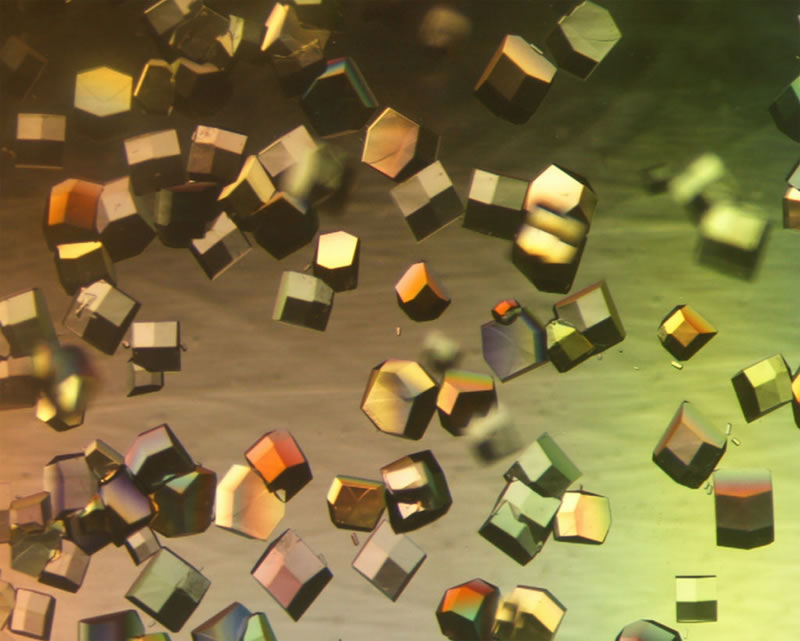 preservar muestras cientificas Crean en la UNAM dispositivo de bolsillo para preservar muestras científicas