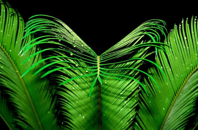 ¿Cansado del calor? 5 plantas que absorben el calor y purifican el aire de tu casa - palma-800x526