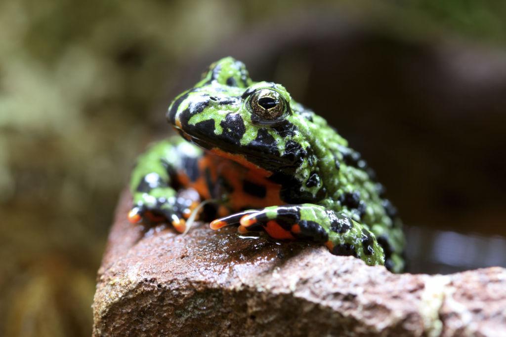 Los 10 animales más extremos del mundo en Canal Once - cuenta-regresiva-2