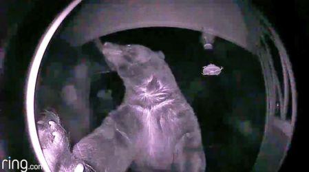 Diez insólitos videos de visitantes que se acercan a tu puerta cuando menos te lo esperas