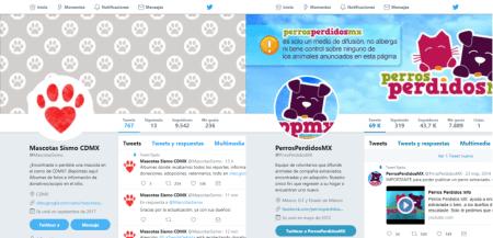 Reporta mascotas extraviadas o encontradas en CDMX durante el sismo mediante redes sociales