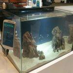 Samsung presenta la iniciativa Upcycling: dale a tu viejo smartphone una nueva vida y propósito - galaxy-s3-fishtank-monitor