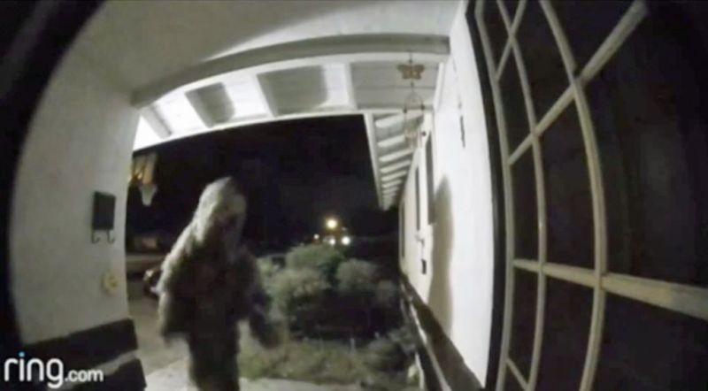 "El escurridizo ""hombre planta"" es capturado gracias al video timbre de Ring - ring-hombre-planta-800x442"