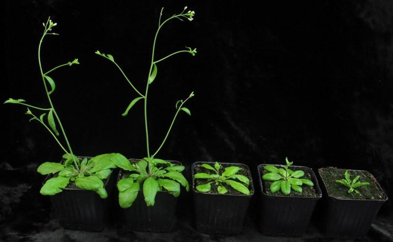 Desarrollan científicos mexicanos fertilizantes a base de nanotecnología - fertilizantes-a-base-de-fosforo-empleando-nanotecnologia-800x493