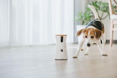 Furbo, la cámara para vigilar a tu perro baja de precio ¡Aprovecha!