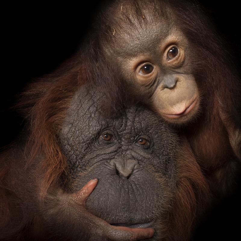 Samsung presenta la exposición Photo Ark, en pro del apoyo al cuidado de animales en peligro de extinción - photo-ark-samsung