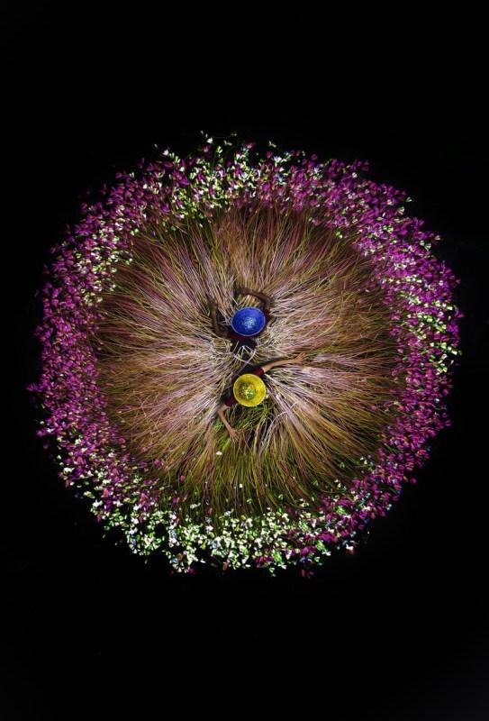 ViewSonic anuncia los ganadores del concurso mundial de fotografía ColorPro Award 2020 - concurso_fotografia_colorpro_award_2020_02_harvesting-water-lily-543x800