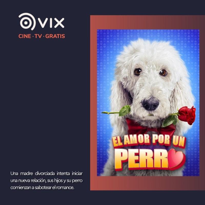 Maratón de lomitos en vix – cine y tv gratis - 5-el-amor-por-un-perro-vix-800x800