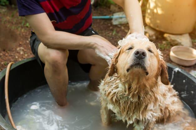 Banho em filhotes: Saiba quando e como fazer