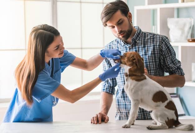 Veterinária dando remédio para o cachorro