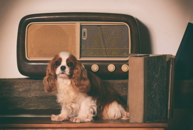 Música traz benefícios à saúde dos cães