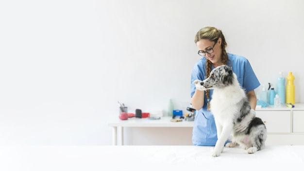 Veterinária dando o comprimido para o cachorro