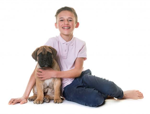 Menino abraçando o bullmastiff em um fundo branco