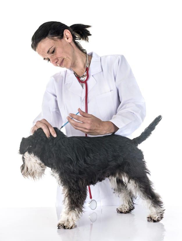 Vacinação dos Cães: Cronograma, Dicas e Informações