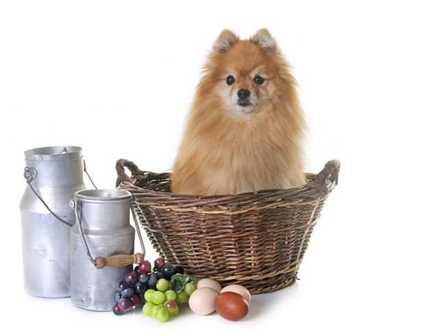 Cachorro dentro da cesta