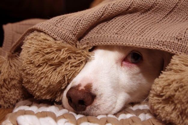 Como cuidar do seu cão no inverno ou em épocas de frio