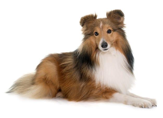 Cuidados cotidianos com a higiene dos cães