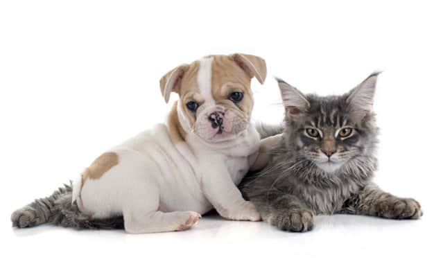 Saiba como evitar ou lidar com a obesidade canina
