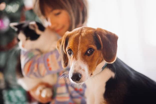 Saiba por que você não deve comprar animais de estimação em feiras e pet shops