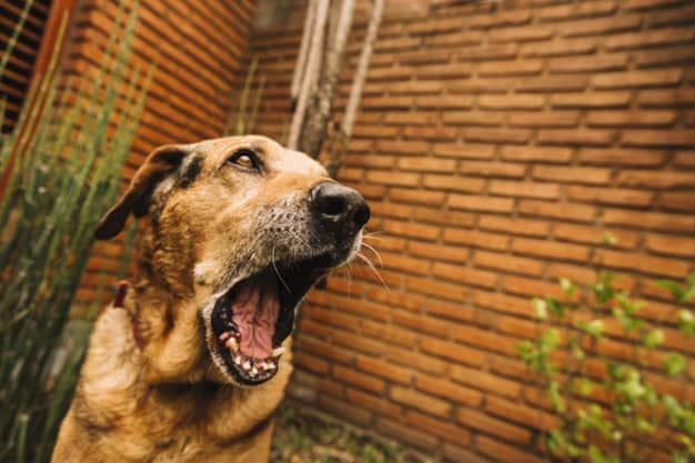 Entenda porque muitos cães adultos não gostam de cães desconhecidos