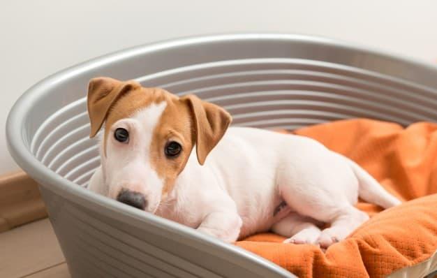 Autismo em cães existe? Saiba tudo sobre o tema.