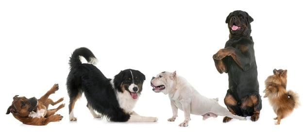 Quantidade de ração ideal para dar ao cão