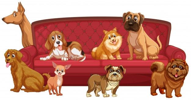 Entenda as necessidades básicas dos cães