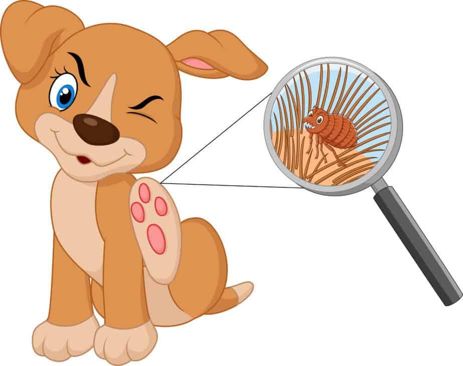 ilustração de cachorro coçando pulga. remédios caseiros para pulgas