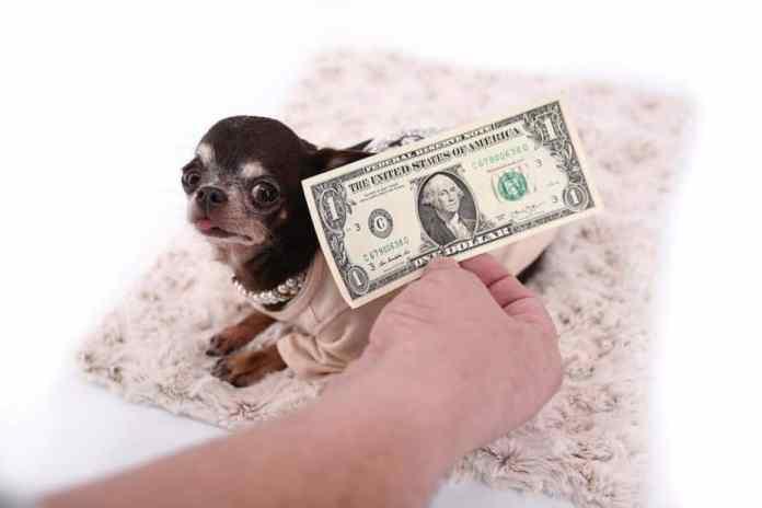 Menor cachorro do mundo (Miracle Milly