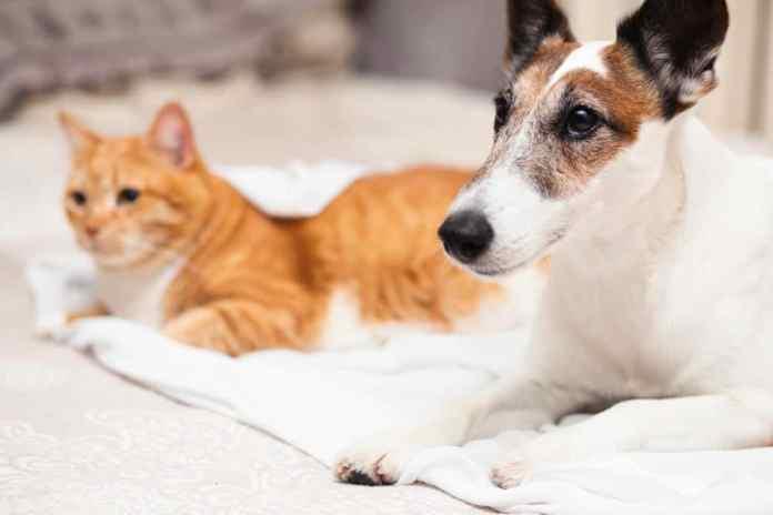 Cachorro do Máskara com gato em uma cama - Créditos da imagem: Freepik
