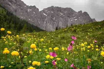 Bergwiesen am Ahornboden