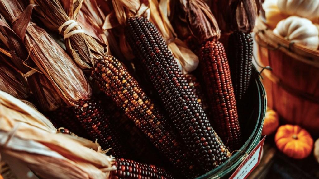El extraordinario sabor del maíz azul