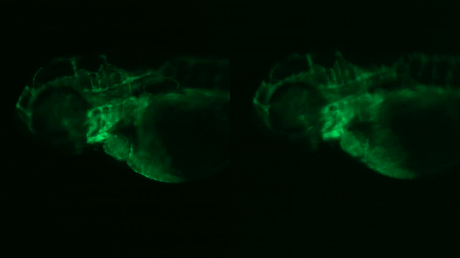 How To Correct Aberration In Stereo Microscopy By Using The Right Objective Lenses