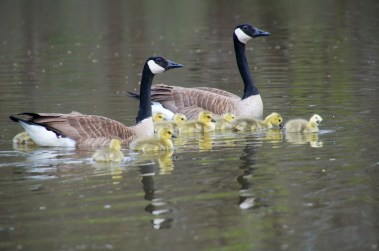 Reflections of Family