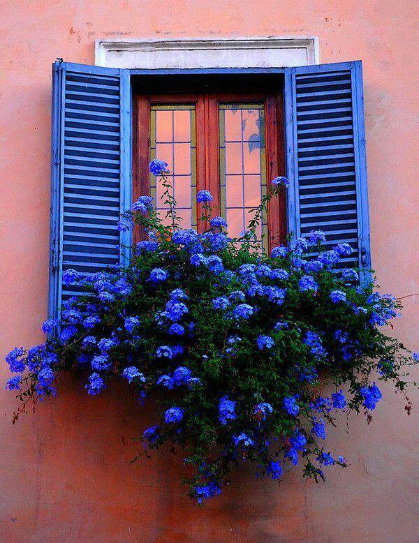 Parede rosa com janelas azuis e flores