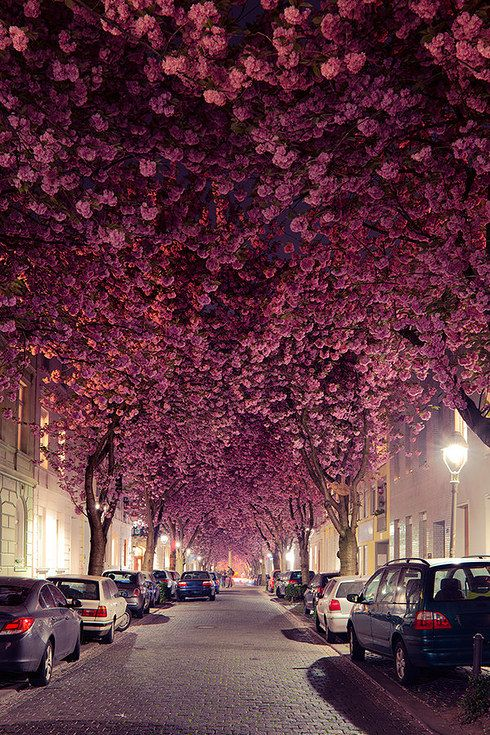 Rose-tint your world on Heerstraße in Bonn, Germany.   10 Streets That Will Actually Warp You Into A Diff