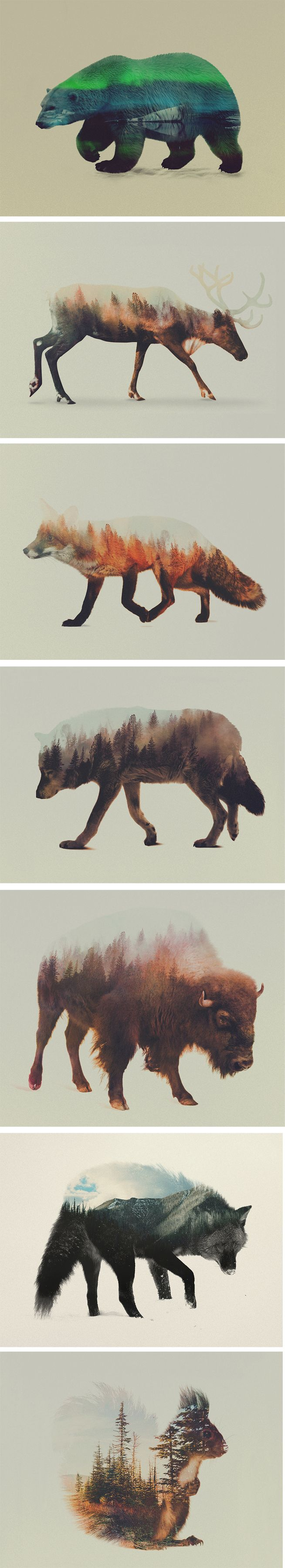 Norwegian visual artist Andreas Lie merges verdant landscapes and photographs of animals to creates subtle
