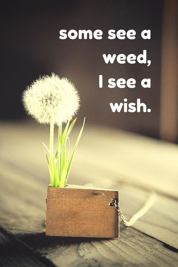 some see a weed,I see a wish.  Click on this image to see the biggest selection of life tips and posit