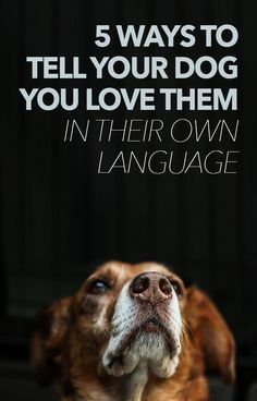 5 Ways To Tell Your Dogs You Love Them In Their Own Language  — great read!!!
