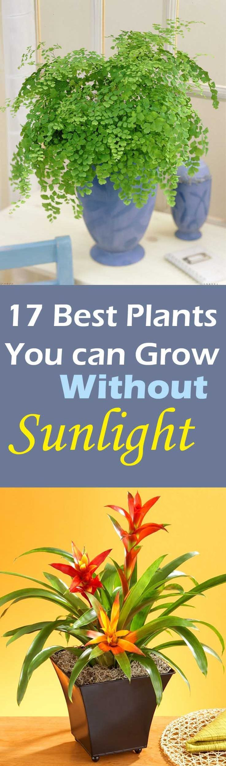 When you are looking for such plants choose that are known for their ability to grow in indirect sunlight. They are ideal