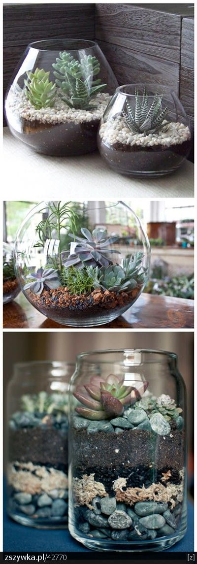 How to make small succulent gardens that look amazing and take only a few minutes!