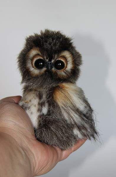 owl named Shu By Averina Olesya – Bear Pile