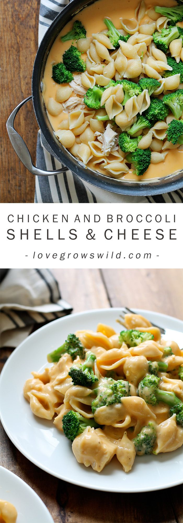 """Chicken and Broccoli Shells and Cheese – """"Love Grows Wild"""" on FoodBlogs.com"""