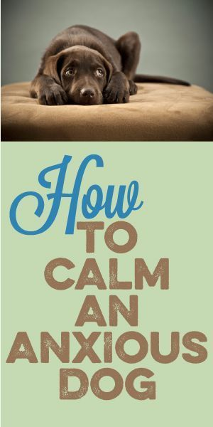 How To Calm An Anxious Dog – Tips for dog anxiety