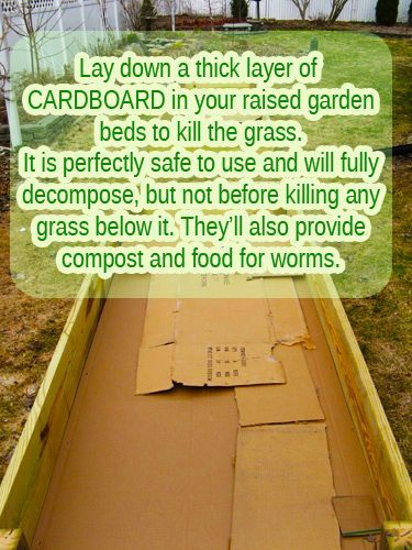 A tip for those about to create a raised garden bed   –  To connect with us, and our community of people from Australia and around