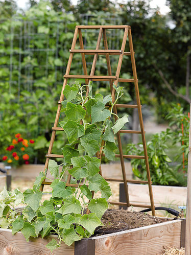 I like this style of trellis because it can b folded and put away when not in use. Its also easy to set up.