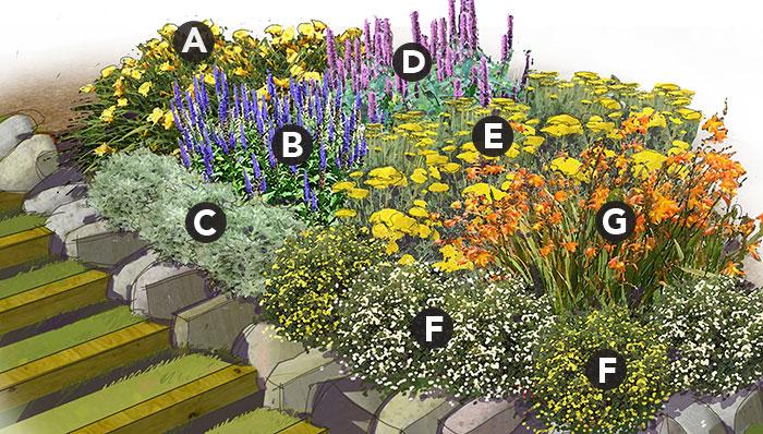 Marathon Bloomers Perennial Garden Plan Plant List A. 3 Daylily (Hemerocallis spp.), Zones 3-10  B. 5 Veronica, Zones 3-8  C. 3