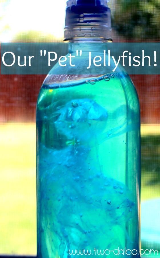 This takes you to several sensory-related ideas with an ocean theme appropriate for young learners… scroll down to see
