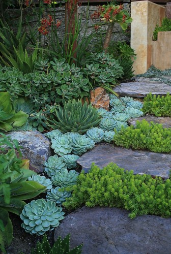 Succulant Garden – if we ever live in a desert, I'm filling my yard with things like these. Adds green.